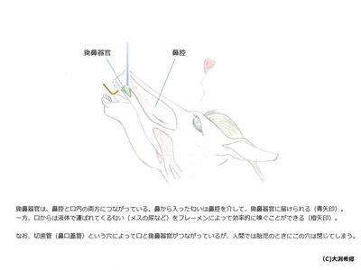 2014_horikawa_9.jpg
