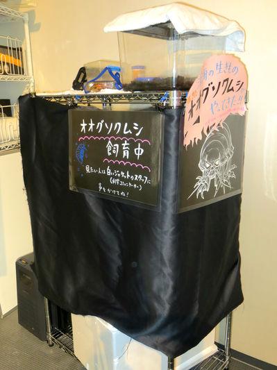 20140516戸坂3.JPG