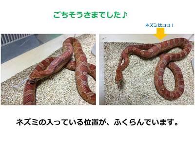 20140405_ohbuchi-4.JPG
