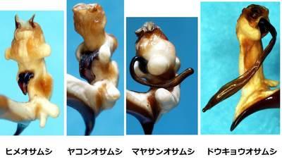 20140528ohbuchi_007.jpg