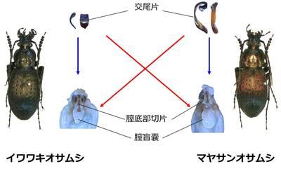 20140528ohbuchi_008.jpg