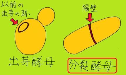 20140715_shimizu_06.jpgのサムネイル画像