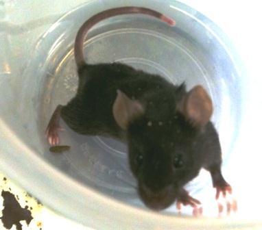 マウス.jpg