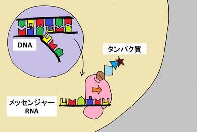 20140912_shimizu_02.jpg