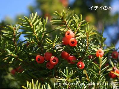 20150301_nishioka_06.jpg