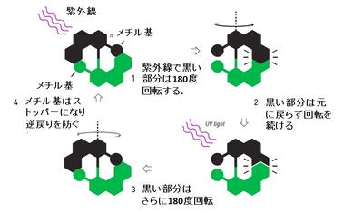 分子モーター.png