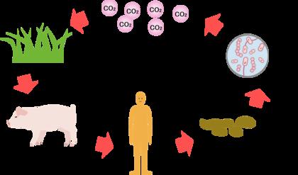 循環イラスト図.png