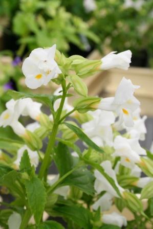 光る花(NEC).jpg