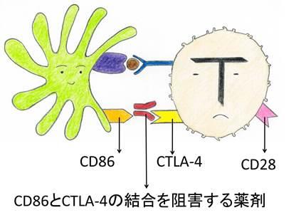 薬PD-1blog.jpg