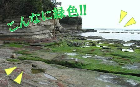 140202_kumagai_02.jpg