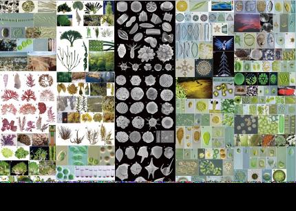 植物の常識をひっくり返す藻類!