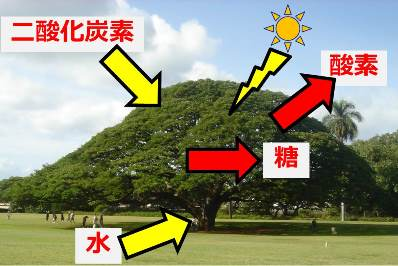 20170503_kajii_02.jpg