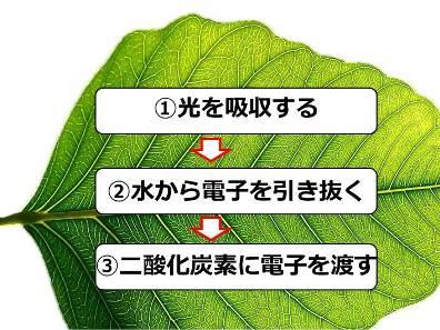 20170503_kajii_04.jpg