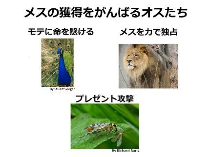 20170915_yamamoto_06.jpg