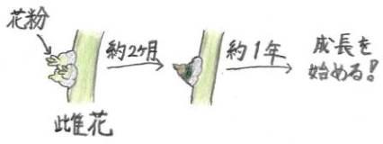 20171010_kajii_06.jpg
