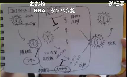 候補薬の仕組みを説明する、科学コミュニケーター鎌田の手書きの図