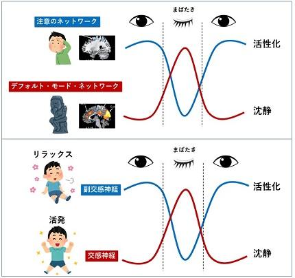 中野珠美先生_神経科学_未来館_最終版抜粋.jpg