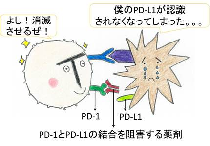 CTLA-4薬blog.jpg