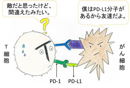 PD-1 抑制仕組みblog.jpg