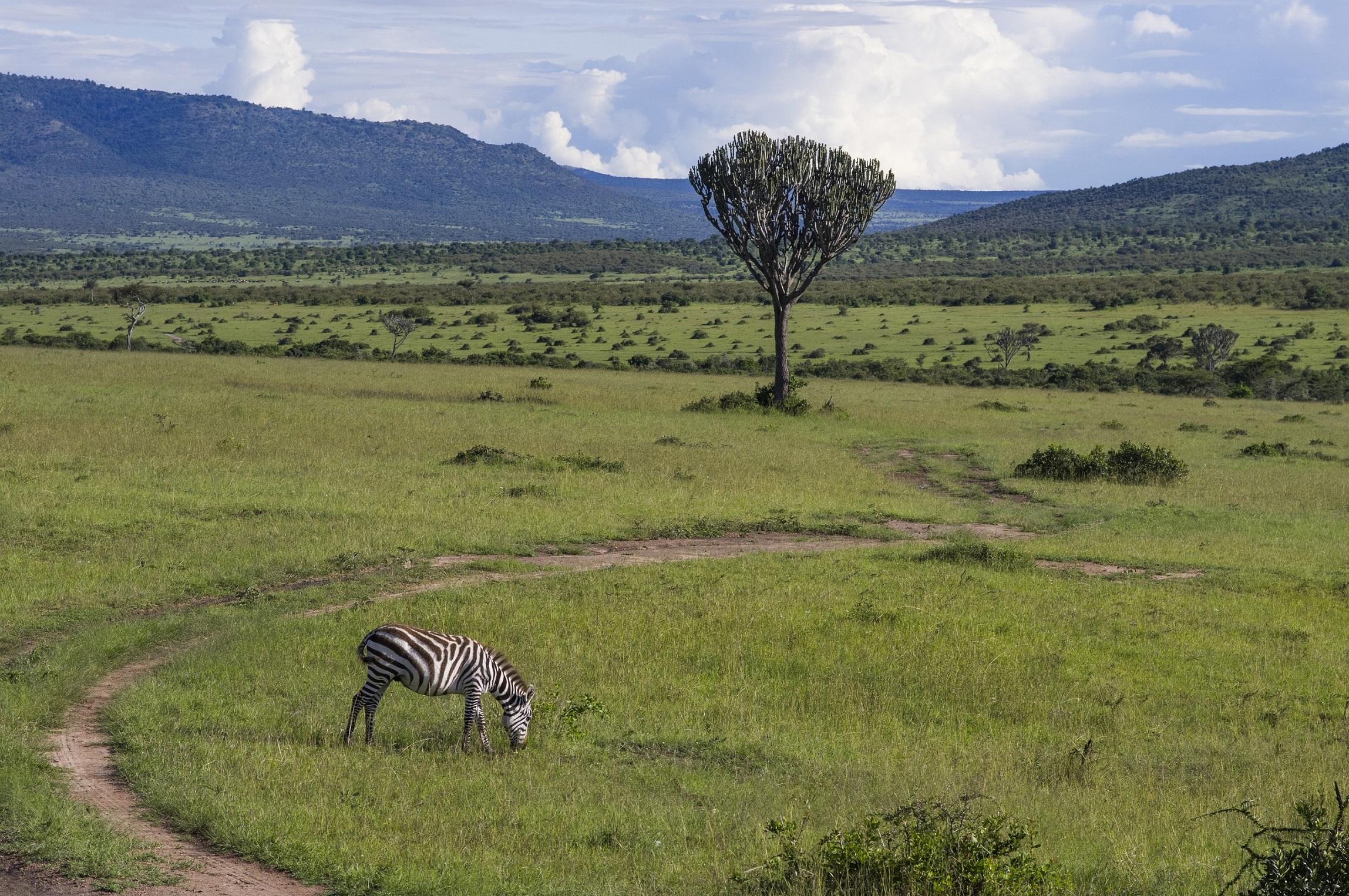 http://blog.miraikan.jst.go.jp/images/savanna.jpg