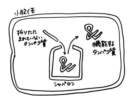 suzuki02_b.jpg